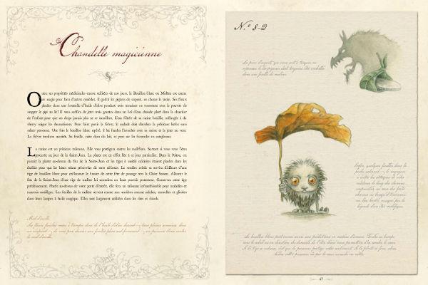 http://le-monde-feerique-de-charline.fr/images/Plantes-sorcieres_3.jpg